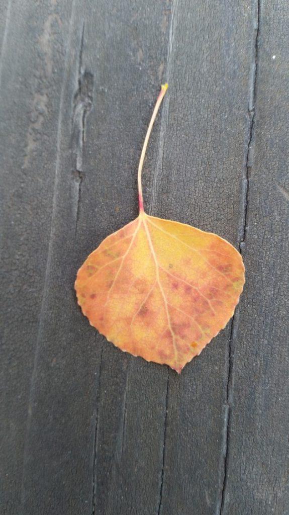 aspen-leaf