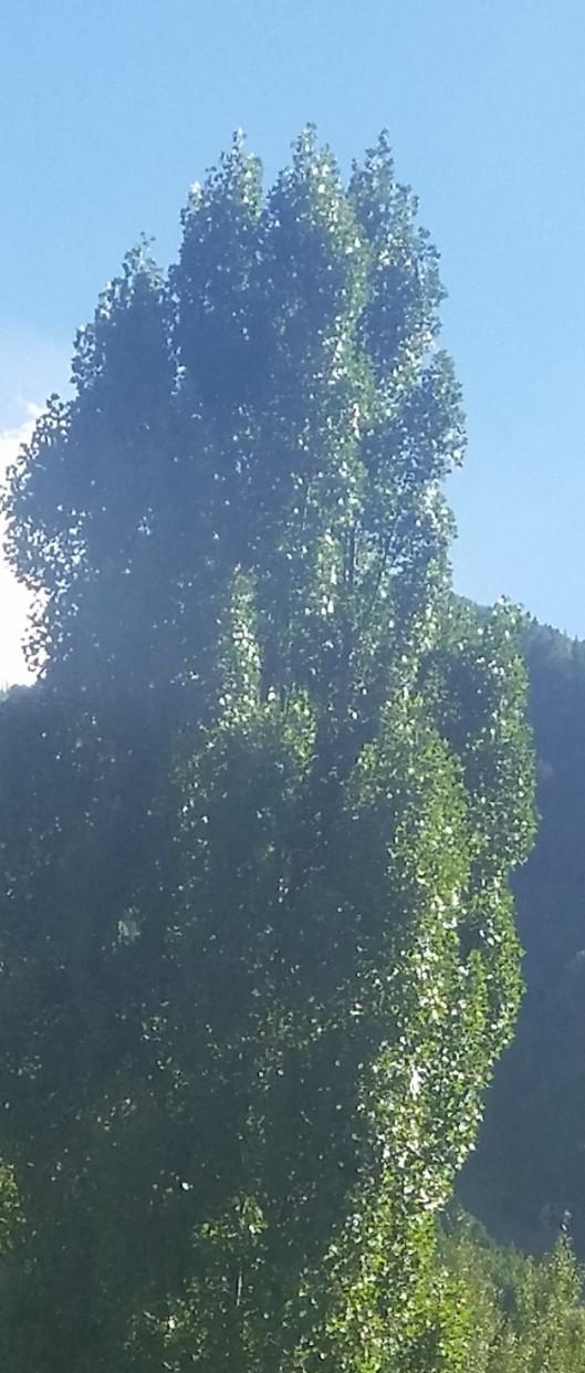 treeinlight2