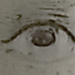aspen-eye