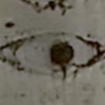 aspen-eye-2
