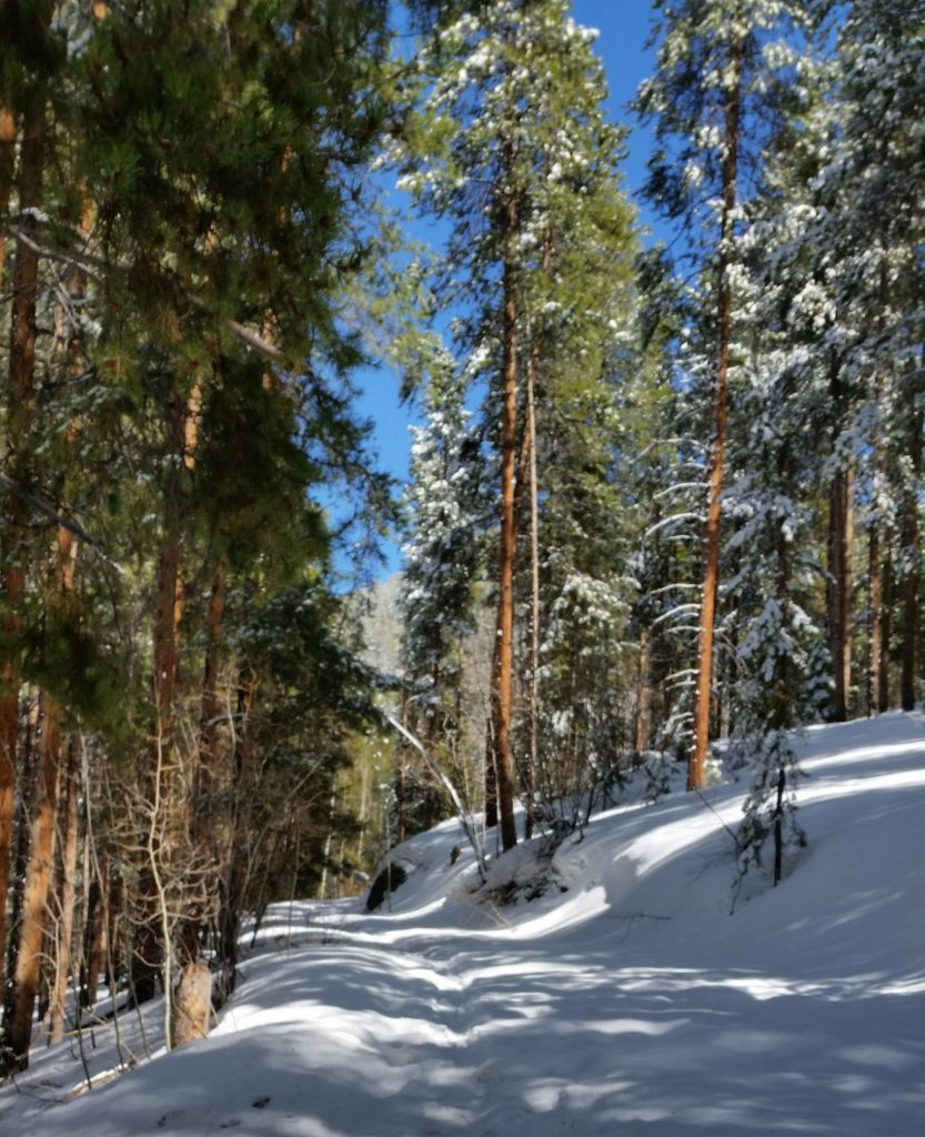 woods4